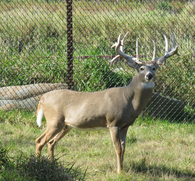 Smokey Hill Deer Farm 2