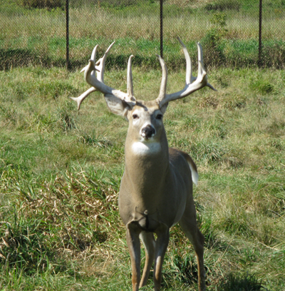 Smokey Hill Deer Farm 3