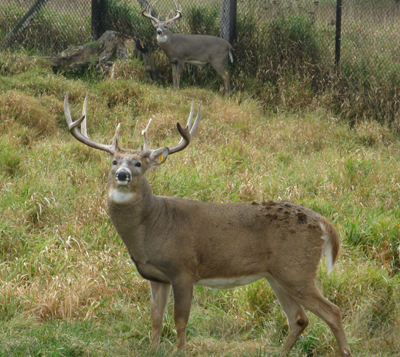 Smokey Hill Deer Farm 6
